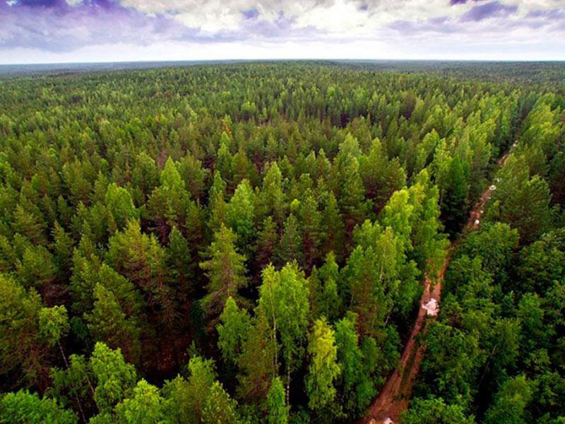 Леса коми производят пеллеты